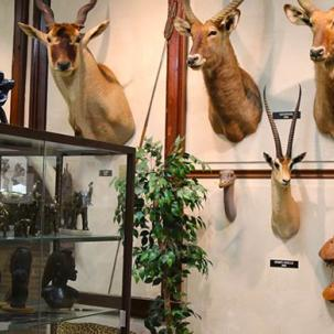 dead animal heads mounted on the wall of the wildlife museum