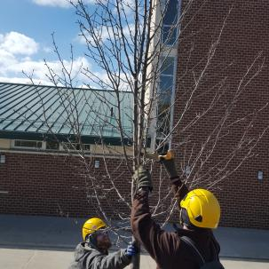 Pruning campus trees
