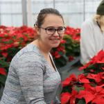 A student prepares for the annual poinsettia sale